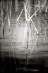 Laughing Reeds 10