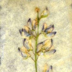 Revealed Flower 2