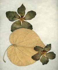 Brazil Flower 4