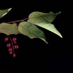 Low-hanging Fruit 2