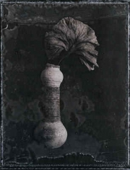 Broken Vase and  Leaf