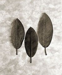 Three Leaves 2