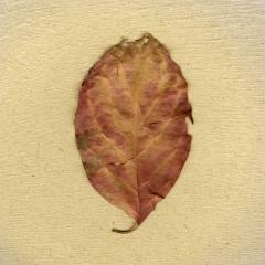Estranged Leaf