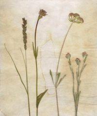 Flowers In A New Field 1