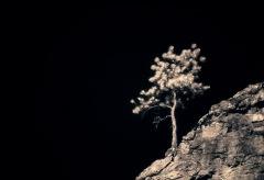 Oblique Tree