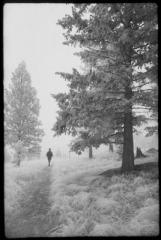 Frost Walk