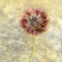 Revealed Flower 3