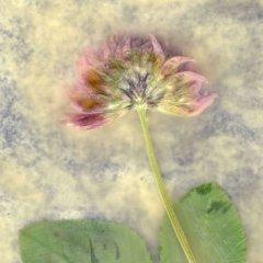 Revealed Flower 4