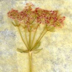 Revealed Flower 5