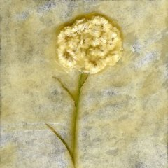 Revealed Flower 6