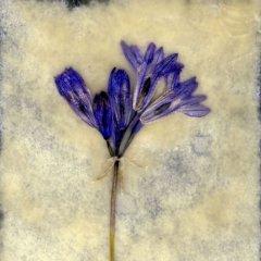 Revealed Flower 7