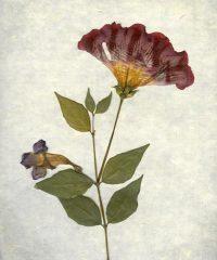 Brazil Flower 2