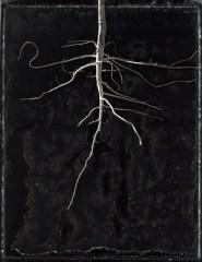 Reveled Root 2