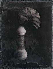 Broken Vase and  Leaf