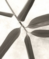 Bamboo Leaves I