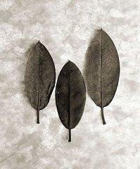 Three Leaves 2