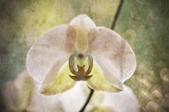 Orchid Gesture