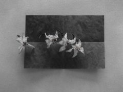 Blossoms On Folded Paper
